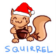 Squirrel's Avatar